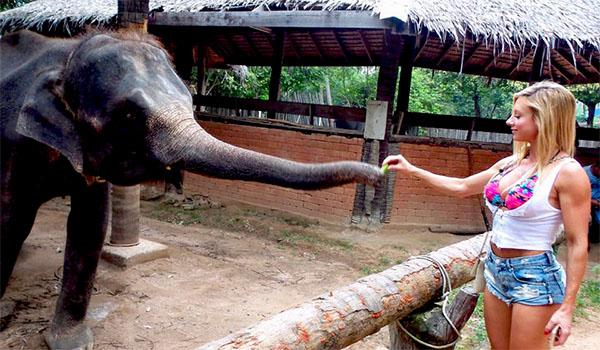 Paige Hathaway tomando uma apalpada do elefante